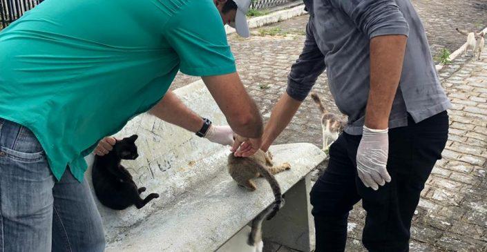 Mais de 14 mil animais vacinados contra raiva na segunda etapa da antirrábica, em Caruaru